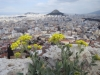 Frühjahrsvegetation auf der Akropolis (im Hintergrund der Lykavittos)